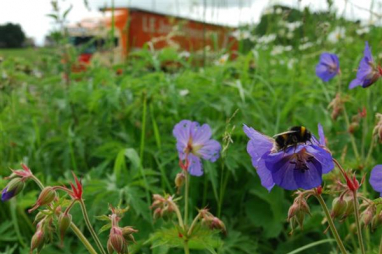 Get Cumbria Buzzing has already led to improved pollinator habitats on the A66, like here at Rheghed, near Penrith.
